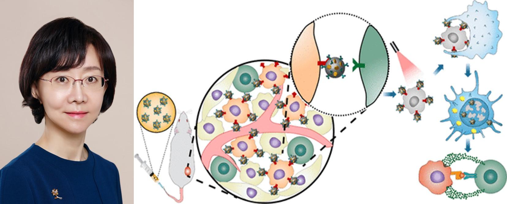 오유경 교수 연구팀, 항암면역 나노기술 개발