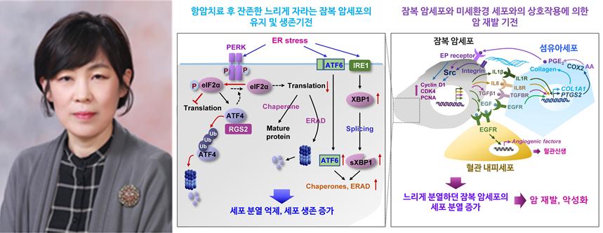 이호영 교수 연구팀, 폐암 재발을 매개하는 생물학적 기전 규명